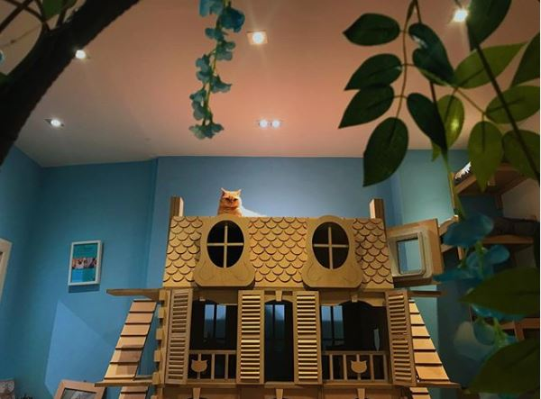 ginger cat sits on a large dollhouse like structure for cats